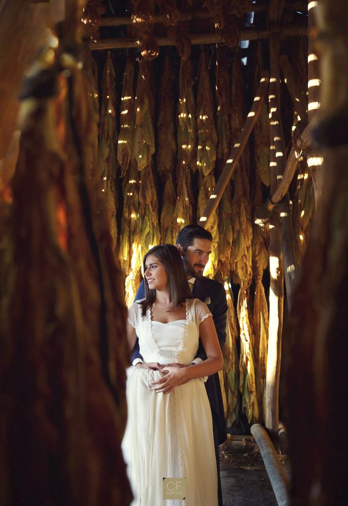 Los novios entre hojas de tabaco. CF Bodas. Fotógrafo especialista en fotos de boda.